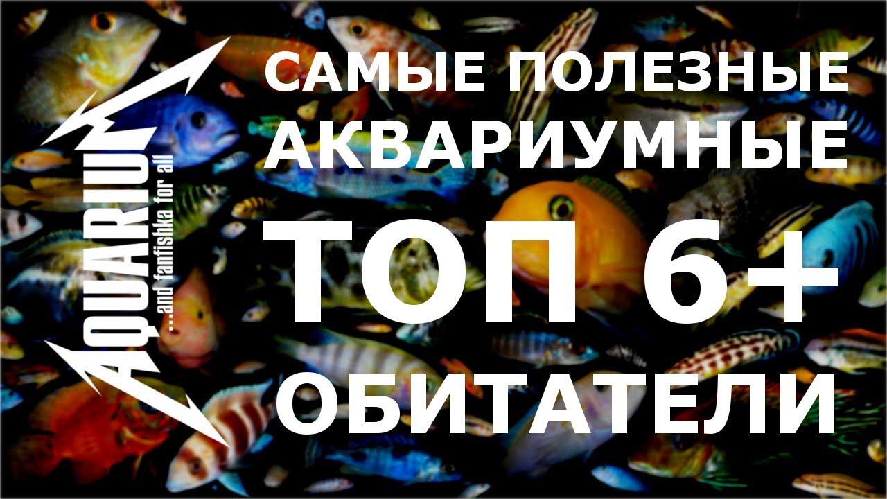 Самые полезные аквариумные обитатели: санитары и чистильщики!