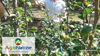 Progetto Pereto Sostenibile - Bayer Crop Science - Fondazione F.lli Navarra - Fabbi