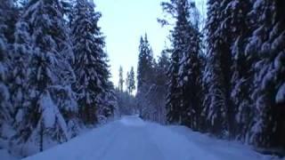 Norwegischer Winterwald-Auswandern