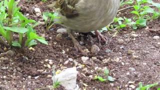 Garden Birds HD