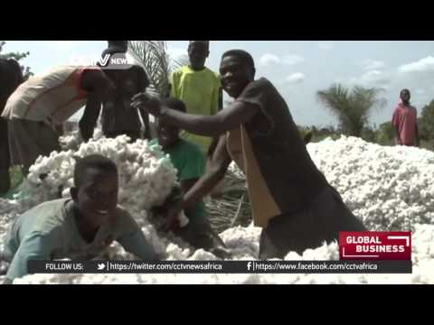 Drought hurting cotton farming yields in Togo