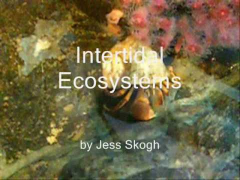 Intertidal Biome AP Biology Project