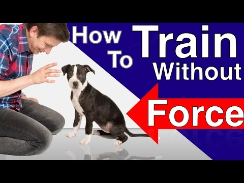 how-to-train-your-dog-without-force:-stop-puppy-biting,-pay-attention-and-train-smarter!