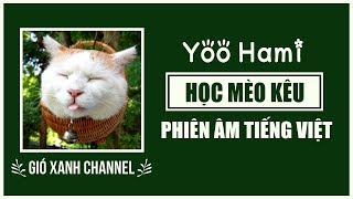 [Phiên âm tiếng Việt] Học Mèo Kêu (Cover Tiếng Hàn) – Yoo Hami