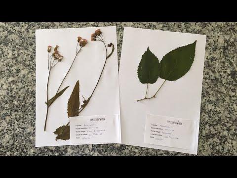Experimentoteca - Prensa para flores e folhas (como fazer exsicatas para herbário)