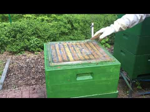 Пчеловодство в Германии . Часть 1.