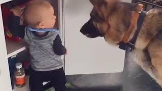 Cute little baby stealing food for his dog