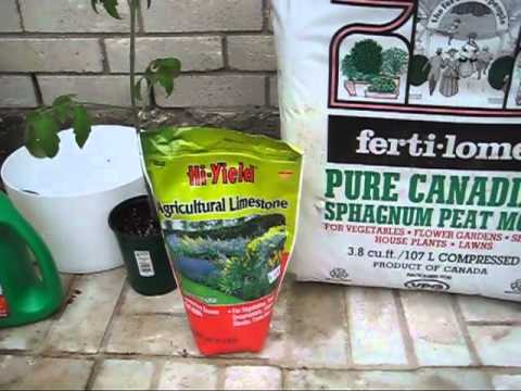 Off grid self watering container gardening system container soil mix youtube - Self watering container gardening system ...