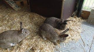 Tierheim Ostermünchen: Die Kaninchen-Brüder Luigi, Louis und Leon suchen ein neues Zuhause