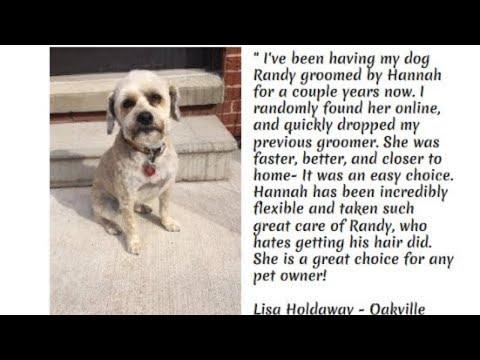 Dog Grooming Bronte Oakville By Hannah Walker