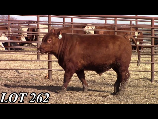 Mead Angus Farms Lot 262