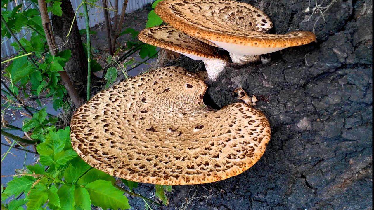 грибы на дереве названия и фото