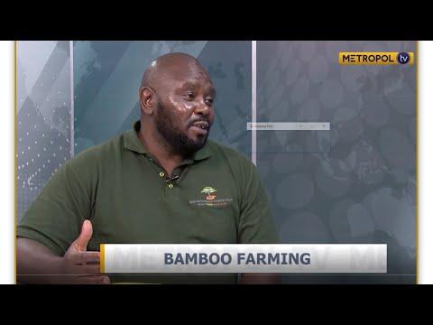 Victor Mwanga   Bamboo farming in Kenya