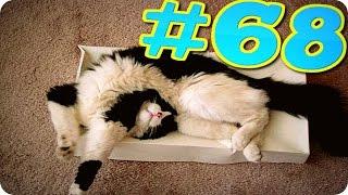 Приколы с животными №68   Спящие коты  HD Смешные животные  Animal videos