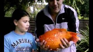 All comments on le plus gros poisson rouge du monde for Gros poisson rouge