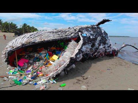 Загрязнение океана пластиком. Катастрофа для млекопитающих и птиц