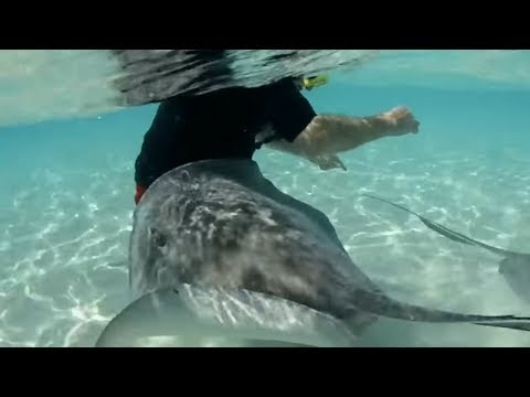 10 Dangerous Animals You Won't Believe Exist!