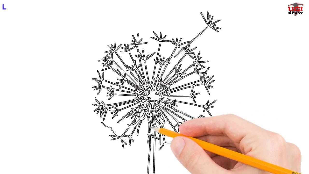 Dandelion Drawing Ideas An Easy Dandelion To Draw For Beginners