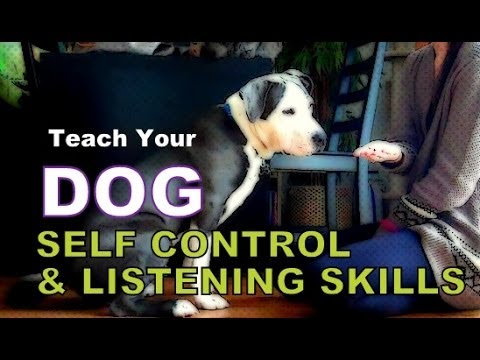 Increase Your Dog's Self Control, Listening Skills & Mental Stimulation - 5 Exercises to play