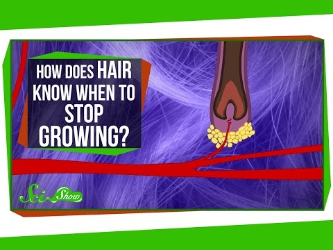 How Does Hair Know When to Stop Growing?