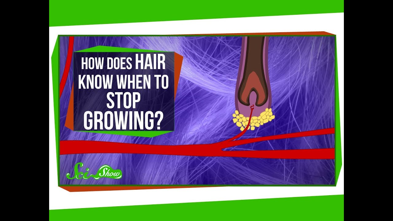 How Does Hair Know When to Stop Growing? | Video