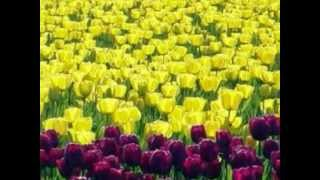 Mohabbat Ko Duniya Salaam Karti Hai [Full Song] (HD) - Saathi