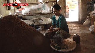 သဘာဝမှိုလုပ်ငန်းကနေ မှိုခေါက်ဆွဲ ပြုလုပ်ဖို့ ကြိုးစား