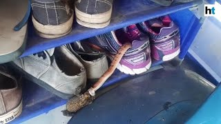 Thai woman finds snake eating a toad in her shoes