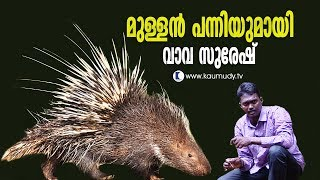 Wow! Porcupine released in the forest | Vava Suresh | Snakemaster
