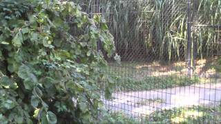 Saturday At The Baltimore Zoo