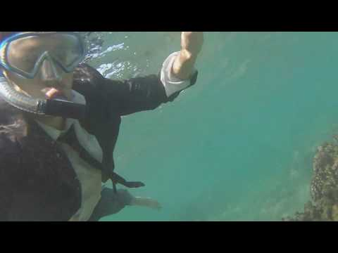 Maui Adventures: Business Suit Snorkeling in Turtle Bay #3