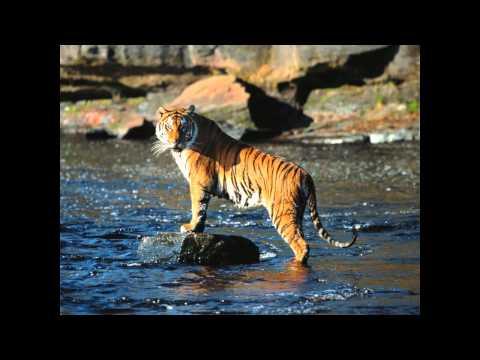 survivor---eye-of-the-tiger-(remix-version)-s-[hd]-3