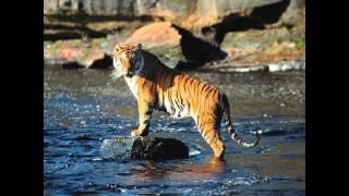Survivor - Eye of the tiger  (remix version) s [HD] 3