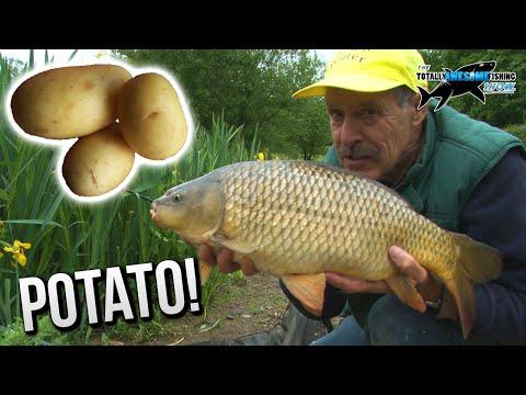 Ловля карпа на картошку. Epic! Carp fishing with POTATOES! | TAFishing