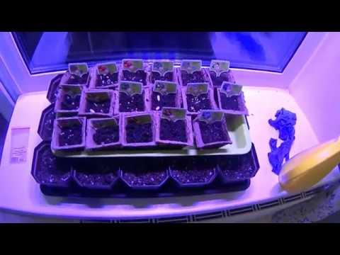 Сеем добро. Акция плантация. Подарочный набор юный растениевод.