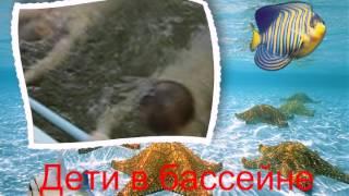 Видео открытка Дети плавают в бассейне 050(, 2015-02-20T14:44:40.000Z)