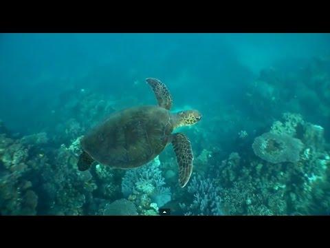 Successful World Heritage Listing of Ningaloo Coast, WA
