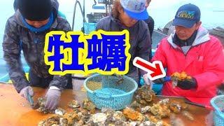 自分たちで獲った牡蠣を思う存分食べつくす!!