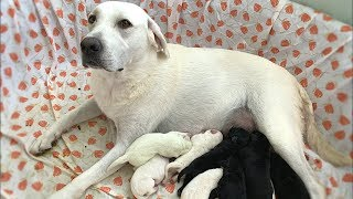 DAISY DUKE HAD 8 PUPPIES!!