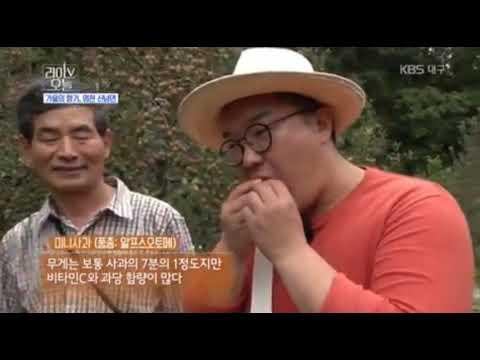 KBS1 라이브오늘 영천 신녕면