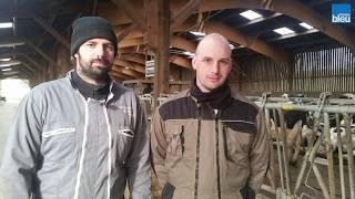 Les frères Alix, éleveurs de bovins à Thorigné-sur-Dué