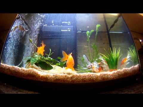 Il pesce rosso doovi for Acquario con pesci rossi