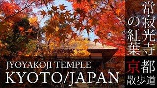 京都観光 嵯峨野 常寂光寺の紅葉 autumn leaves of jojakkoji temple in kyoto japan bgmで日本旅行 そうだ京都行こう 京都散歩道