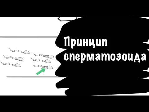 Путь сперматазоида к яйцеклетке видео