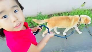【こなつ☆5歳】おじいちゃん犬(風太)とお散歩したよ!
