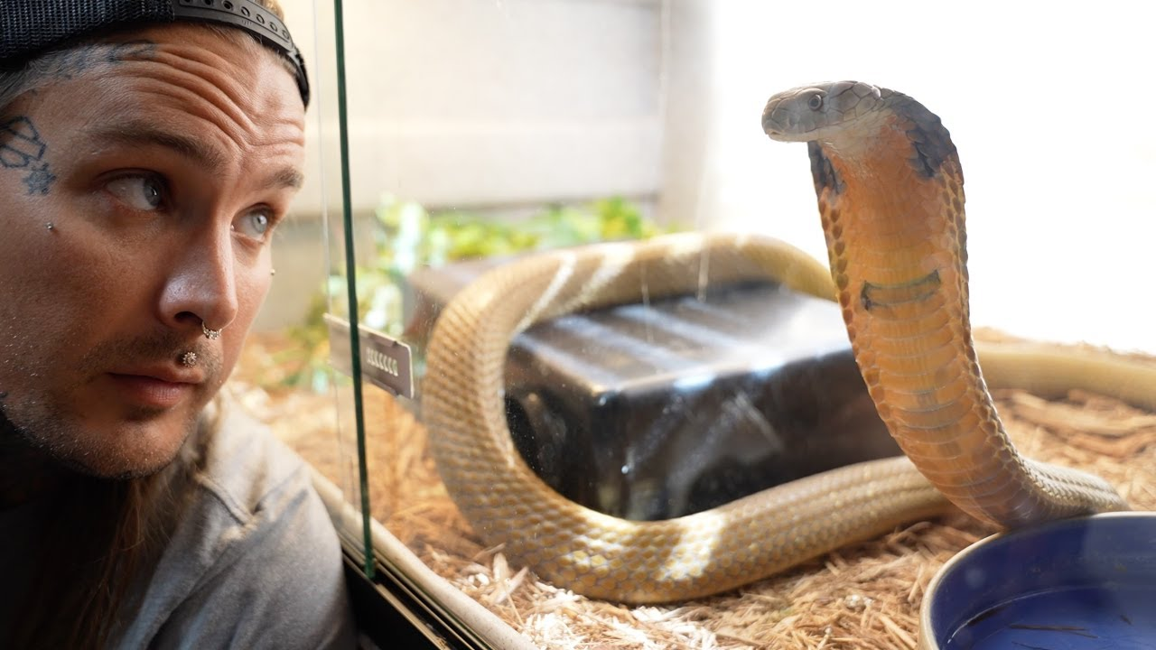 Hanging out with my King Cobra Rusty!
