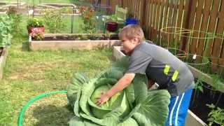 Bonnie 3rd Grade Giant Cabbage Project 2013