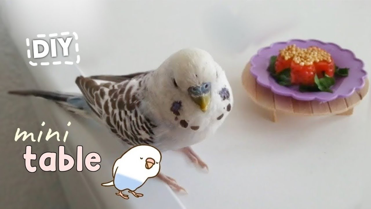 I made a mini budgie table from popsicle sticks | DIY