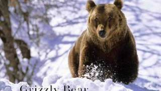 Bill Monroe ::: Footprints In The Snow (with lyrics)
