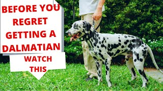 Must know facts about Dalmatian   Dalmatian problem  Know these before getting a Dalmatian puppy